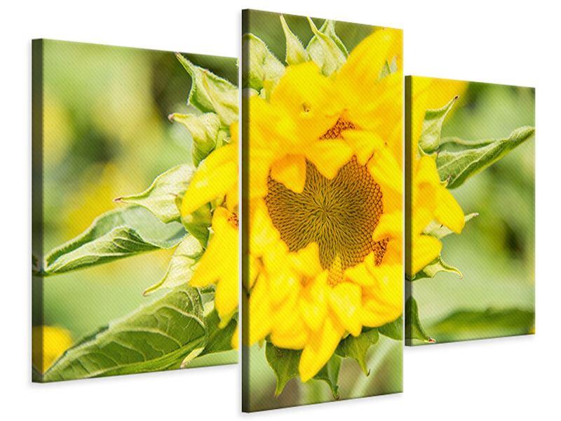 Leinwandbild 3-teilig modern Wilde Sonnenblume