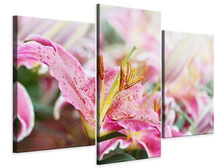 Leinwandbild 3-teilig modern Lilien im Tau
