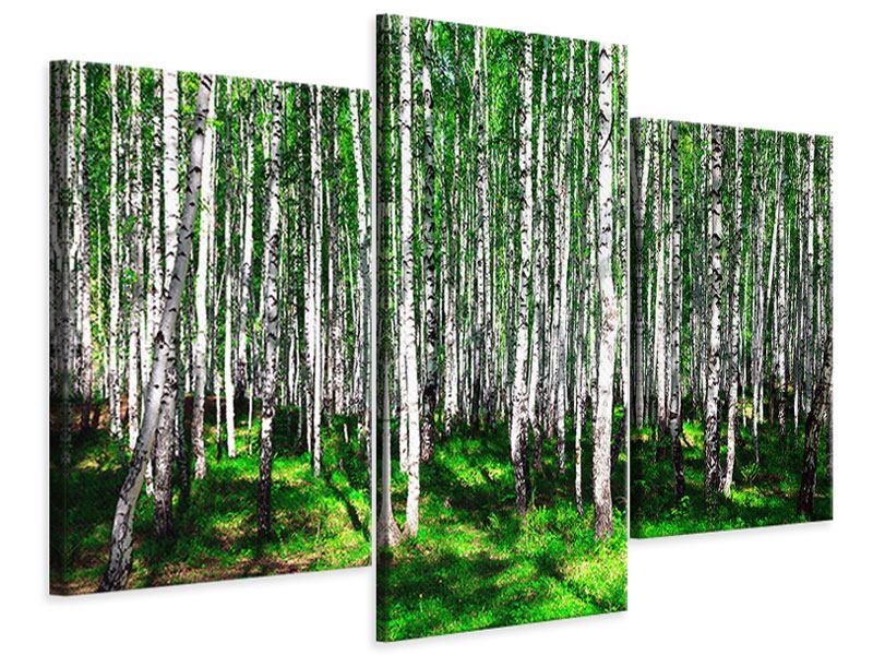 Leinwandbild 3-teilig modern Sommerlicher Birkenwald