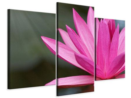 Leinwandbild 3-teilig modern XXL Seerose in Pink