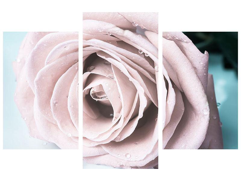 Leinwandbild 3-teilig modern Pastellrose