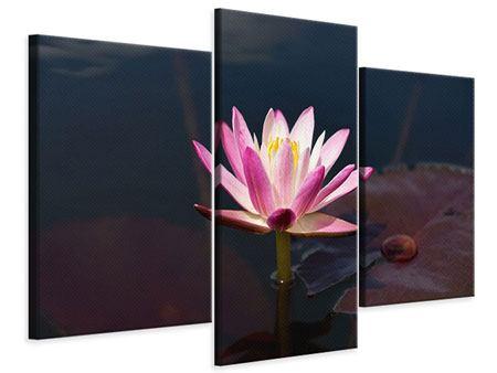 Leinwandbild 3-teilig modern Seerose in der Abenddämmerung