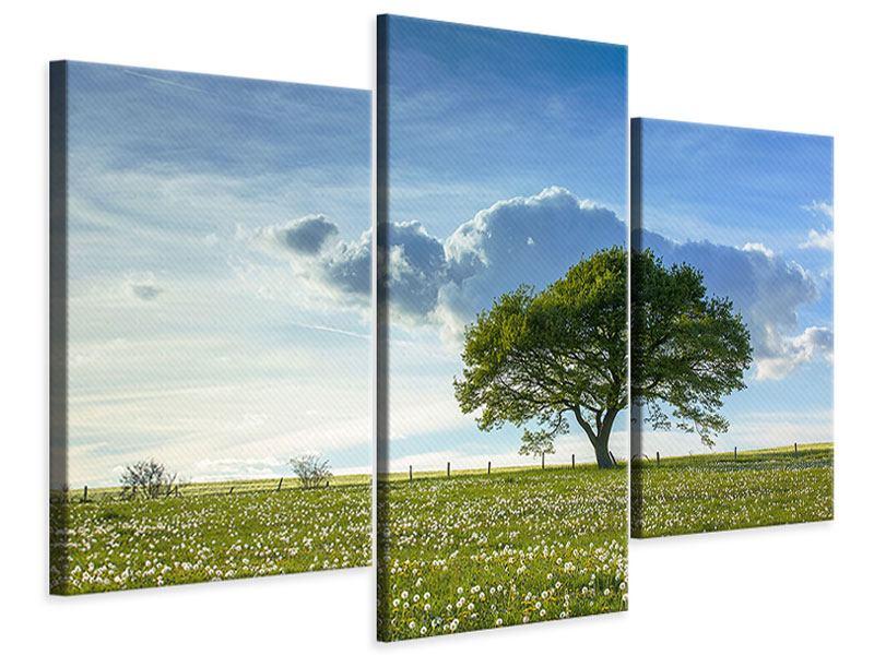 Leinwandbild 3-teilig modern Frühlingsbaum