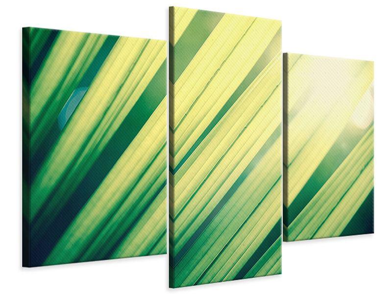 Leinwandbild 3-teilig modern Beleuchtetes Palmblatt