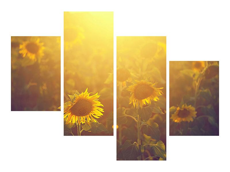 Leinwandbild 4-teilig modern Sonnenblumen im goldenen Licht