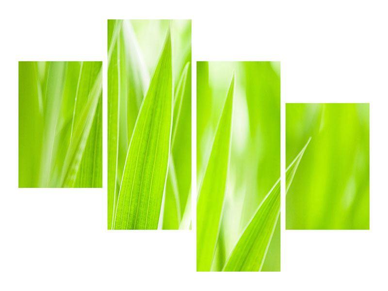 Leinwandbild 4-teilig modern Gras XXL