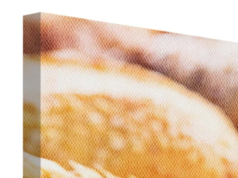 Leinwandbild 4-teilig modern Brötchen