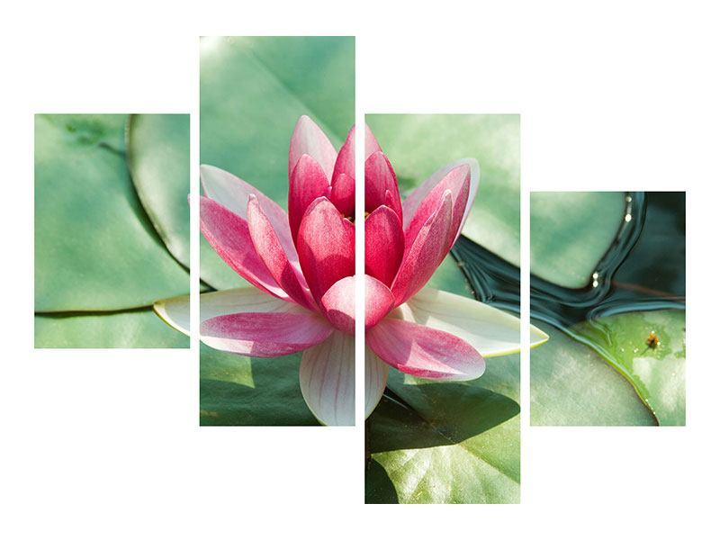 Leinwandbild 4-teilig modern Der Frosch und das Lotusblatt