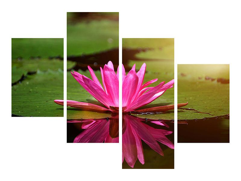 Leinwandbild 4-teilig modern Lotus im Wasser