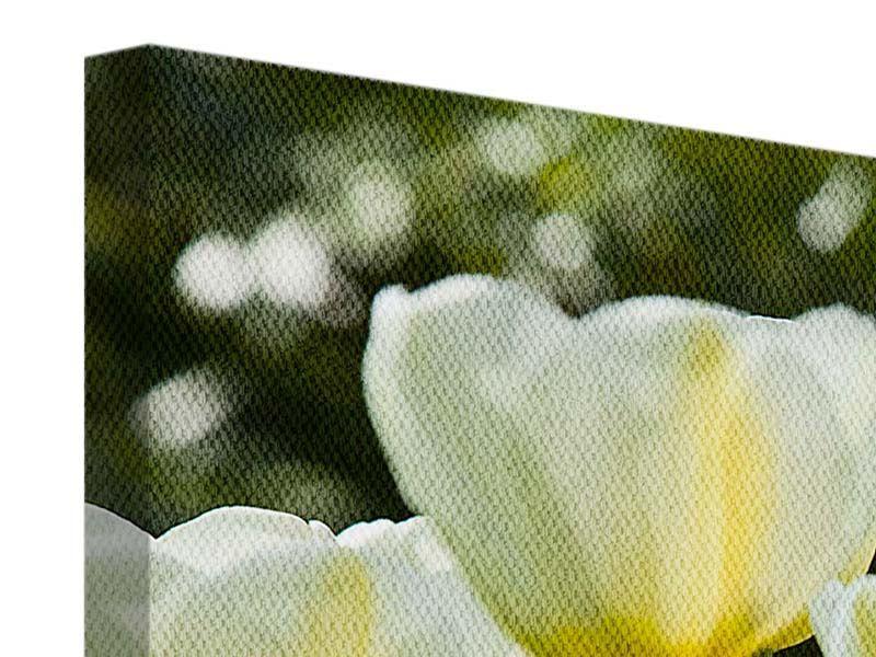 Leinwandbild 4-teilig modern Tulpen bei Sonnenuntergang