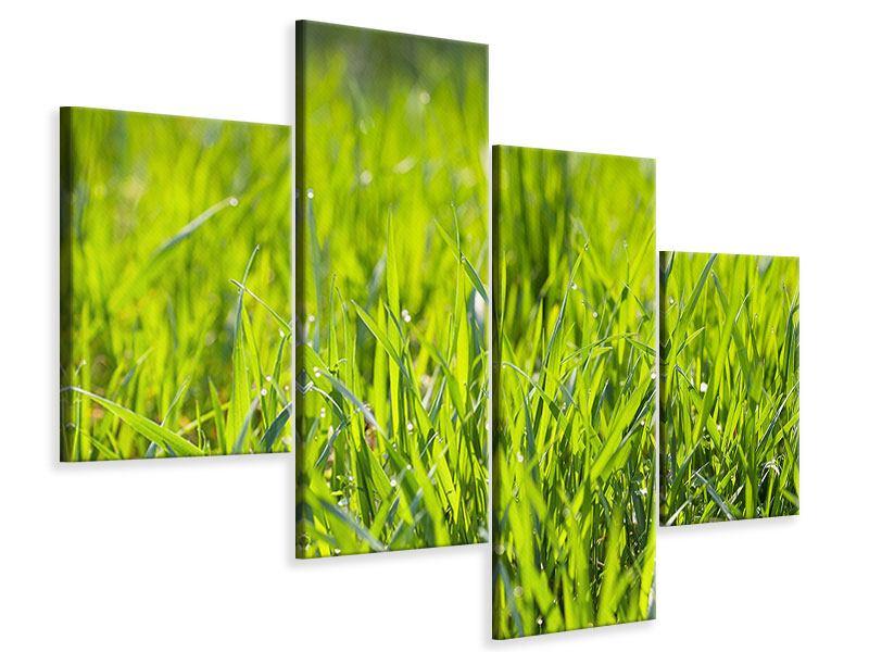 Leinwandbild 4-teilig modern Gras im Morgentau