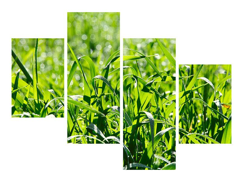 Leinwandbild 4-teilig modern Sonniges Gras