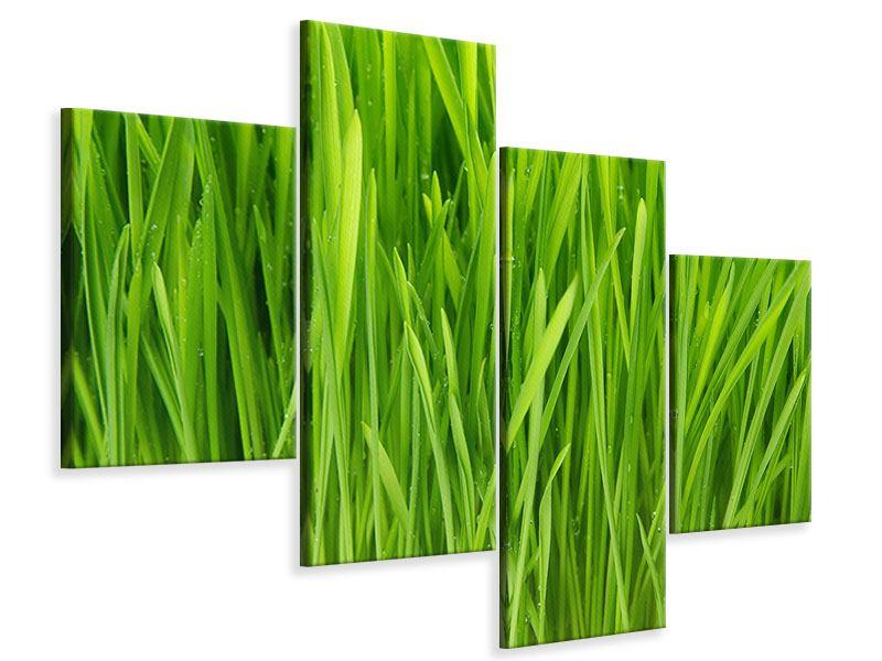 Leinwandbild 4-teilig modern Grashalme im Morgentau
