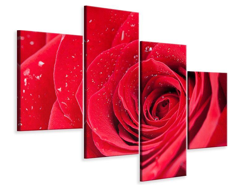 Leinwandbild 4-teilig modern Rote Rose im Morgentau