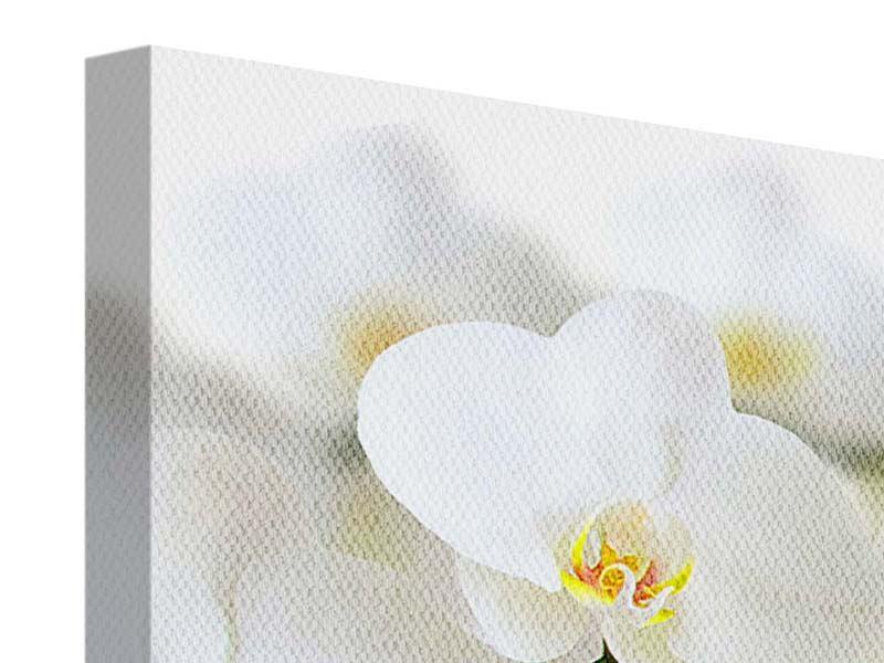 Leinwandbild 4-teilig modern Weisse Orchideen