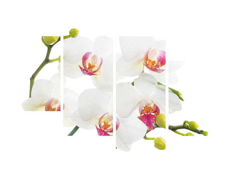 Leinwandbild 4-teilig modern Orchideenliebe