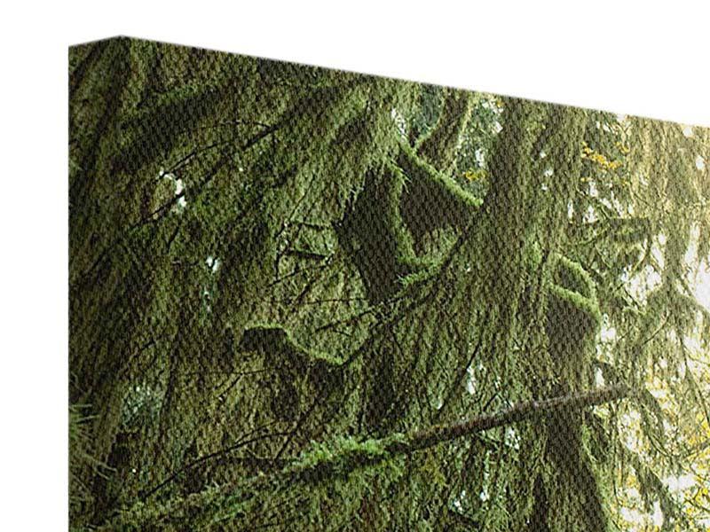 Leinwandbild 4-teilig modern Verträumter Wald