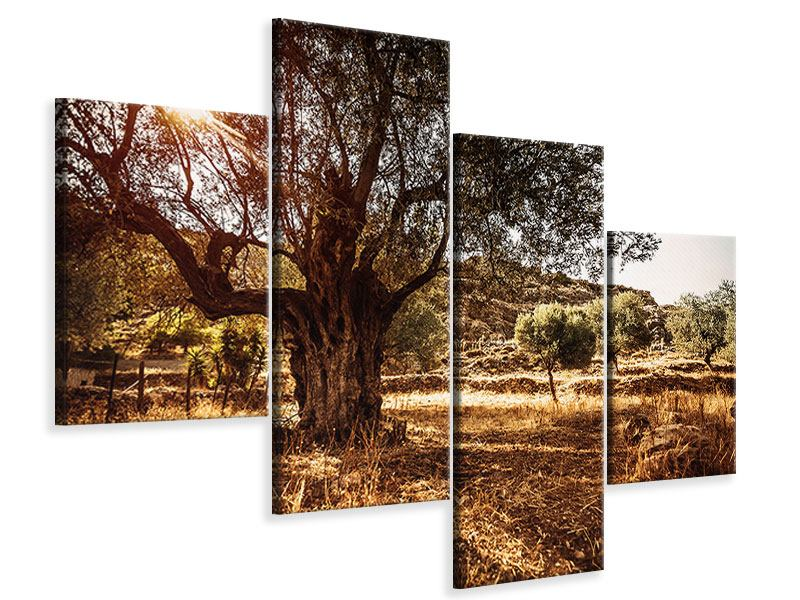 Leinwandbild 4-teilig modern Olivenhain