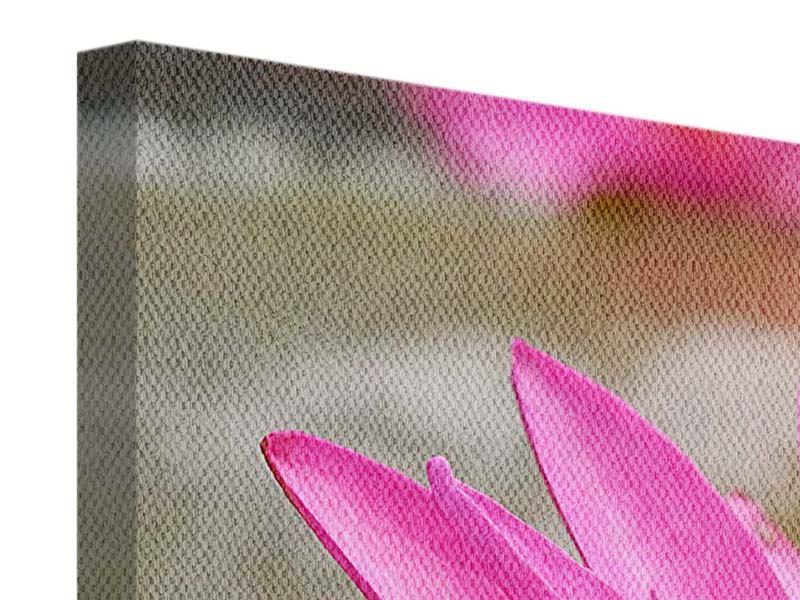 Leinwandbild 4-teilig modern Sonnige Seerose
