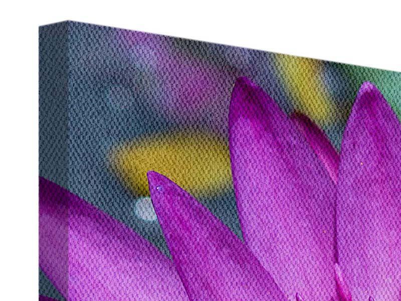 Leinwandbild 4-teilig modern Makro Seerose in Lila