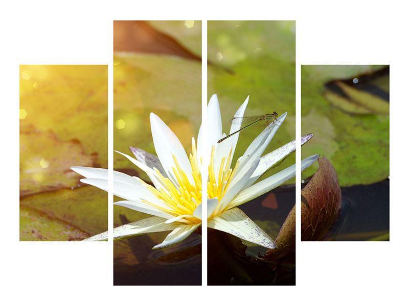 Leinwandbild 4-teilig Seerose