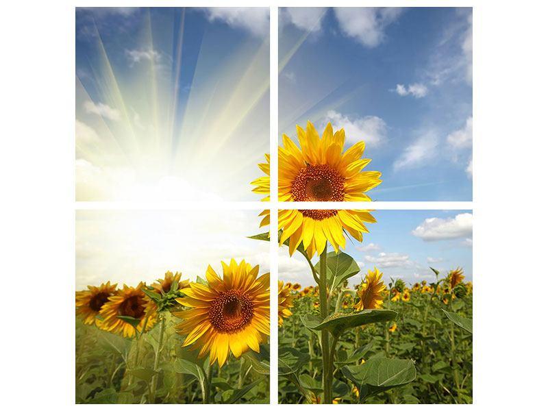 Leinwandbild 4-teilig Sonnenblumen im Sonnenlicht