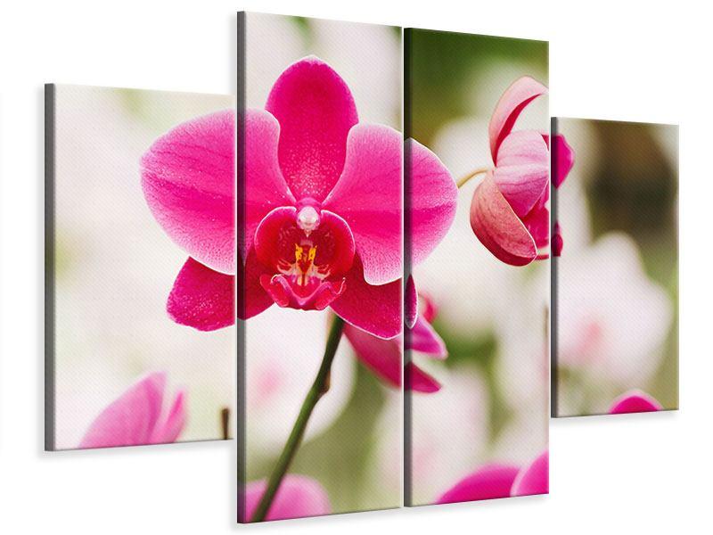 Leinwandbild 4-teilig Perspektivische Orchideen