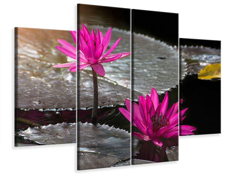 Leinwandbild 4-teilig Seerosen im Morgentau
