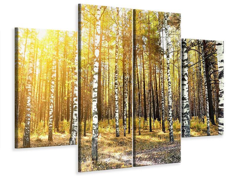 Leinwandbild 4-teilig Birkenwald
