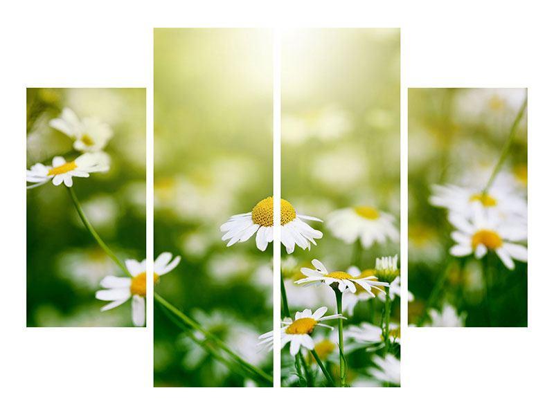 Leinwandbild 4-teilig Die Gänseblümchen