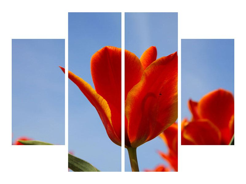 Leinwandbild 4-teilig Rote Tulpen in XXL