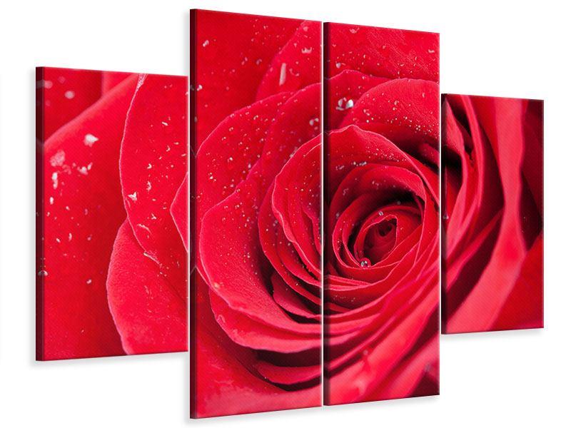 Leinwandbild 4-teilig Rote Rose im Morgentau
