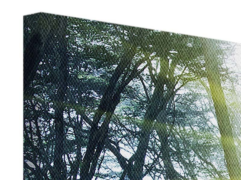 Leinwandbild 4-teilig Sonnenstrahlen im Wald