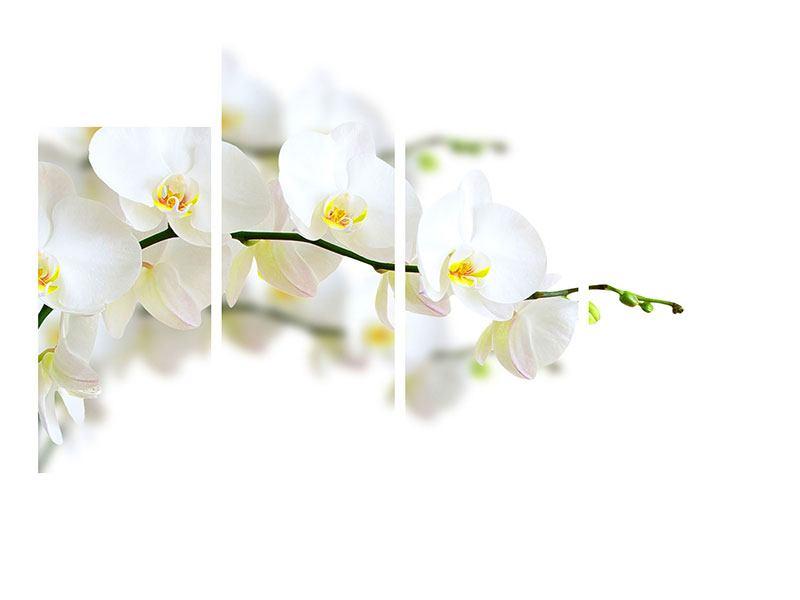 Leinwandbild 4-teilig Weisse Orchideen