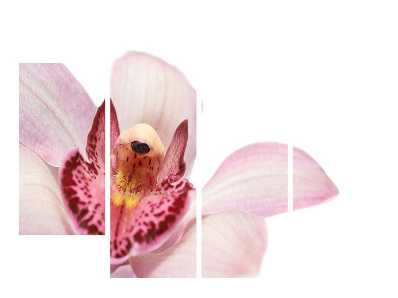 Leinwandbild 4-teilig Orchideenblüte XXL