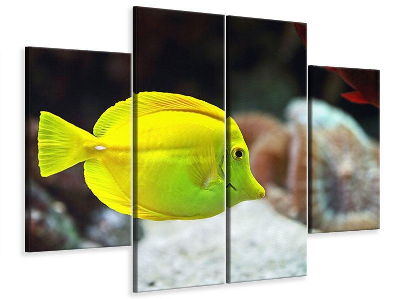 Leinwandbild 4-teilig Segelflossendoktorfisch