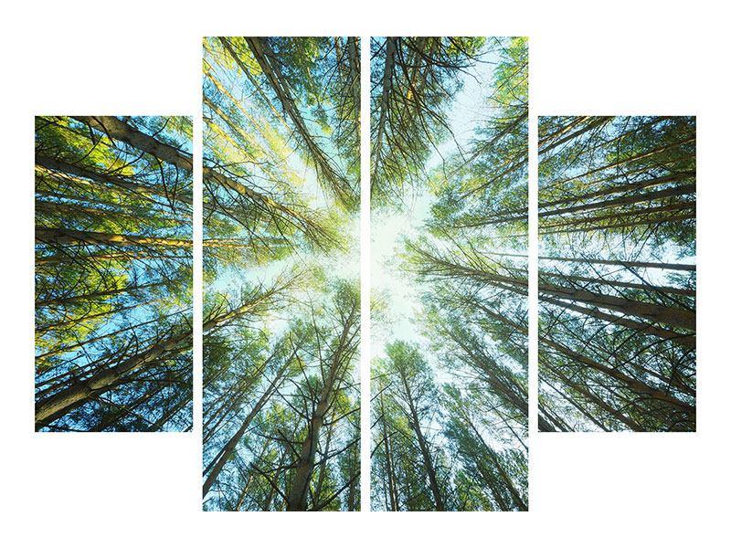 Leinwandbild 4-teilig Kiefernwald