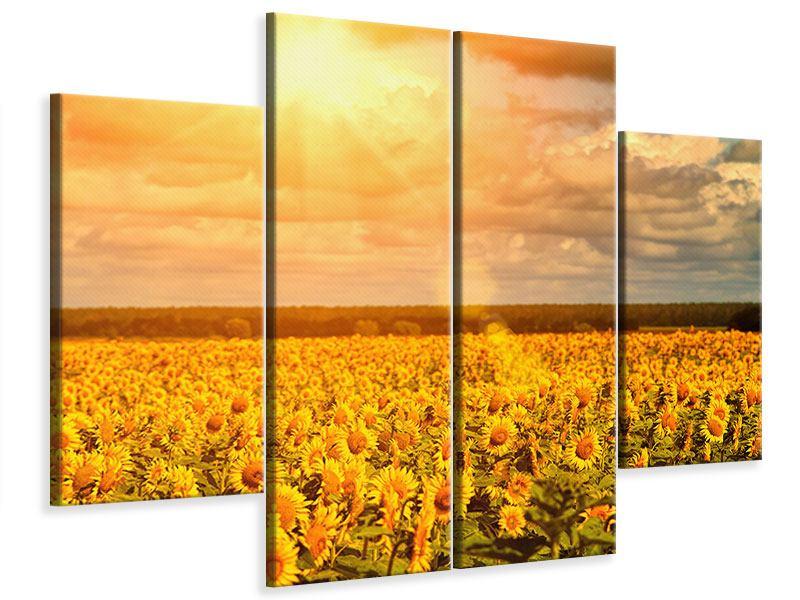 Leinwandbild 4-teilig Goldenes Licht für Sonnenblumen