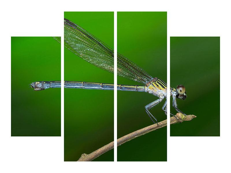 Leinwandbild 4-teilig Die Libelle