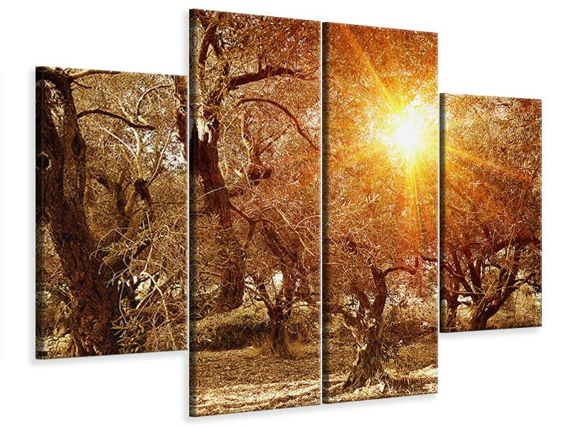Leinwandbild 4-teilig Olivenbäume im Herbstlicht