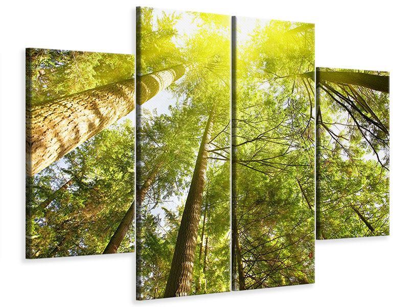 Leinwandbild 4-teilig Baumkronen in der Sonne