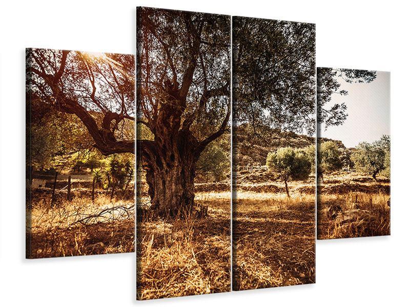 Leinwandbild 4-teilig Olivenhain