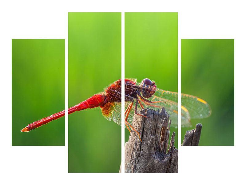 Leinwandbild 4-teilig Libelle XXL
