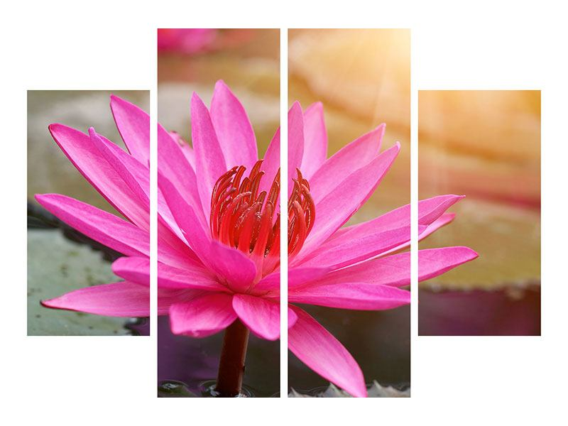 Leinwandbild 4-teilig Sonnige Seerose