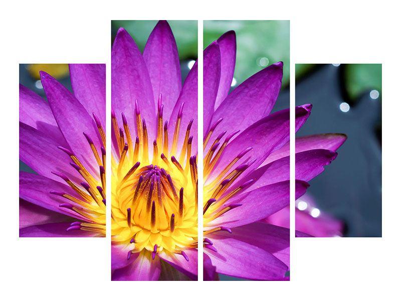 Leinwandbild 4-teilig Makro Seerose in Lila