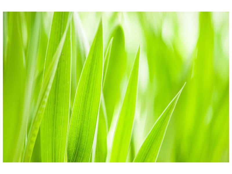 Leinwandbild Gras XXL