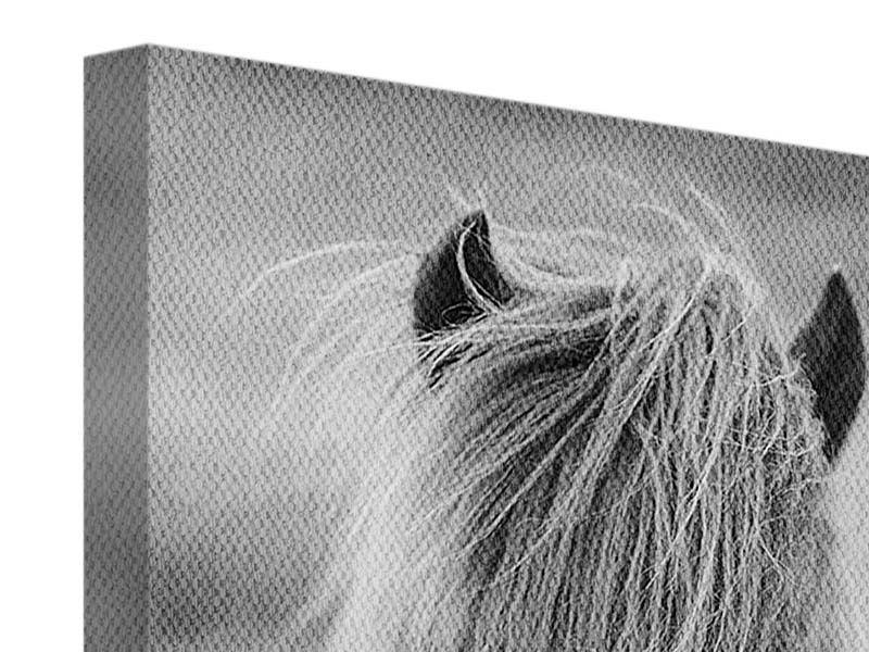 Leinwandbild Da Steht Ein Pferd Auf`m Flur