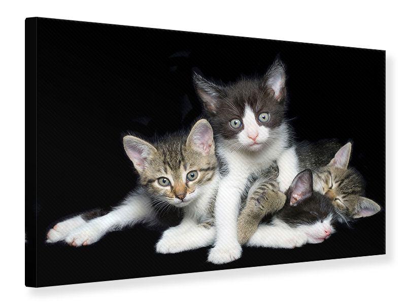 Leinwandbild Katzenquartett