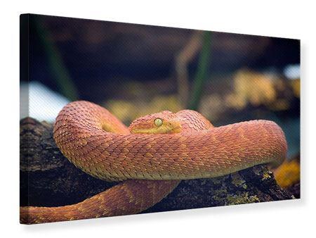 Leinwandbild Schlange