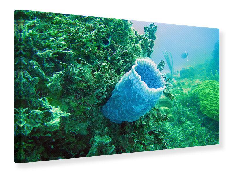 Leinwandbild Korallen
